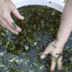 A bath made with various herbs used in spiritual cleansing